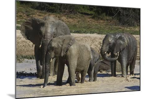 African Elephants 088-Bob Langrish-Mounted Photographic Print
