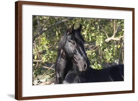 Andalusian 042-Bob Langrish-Framed Art Print