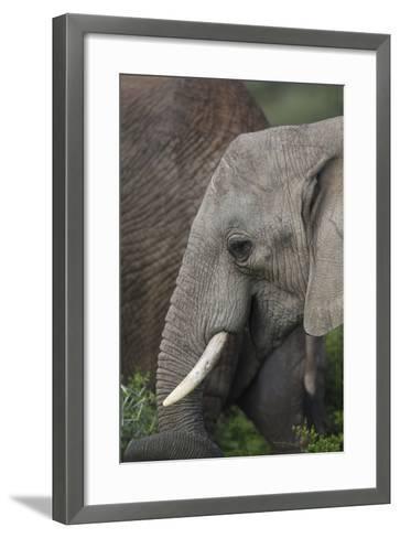 African Elephants 089-Bob Langrish-Framed Art Print