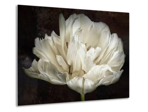 Double White Tulip-Cora Niele-Metal Print