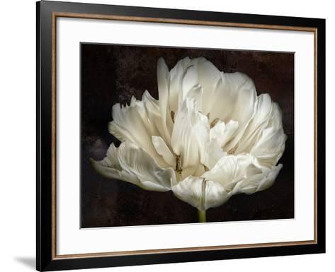 Double White Tulip-Cora Niele-Framed Art Print