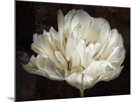 Double White Tulip-Cora Niele-Mounted Photographic Print