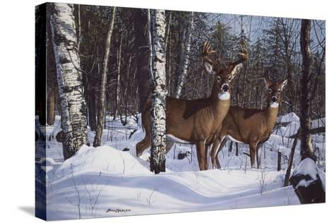 Zone 1 Whitetail-Bruce Miller-Stretched Canvas Print