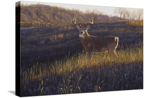 Zone 4-Bruce Miller-Stretched Canvas Print