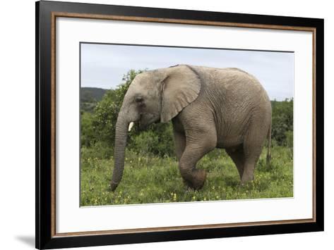 African Elephants 135-Bob Langrish-Framed Art Print
