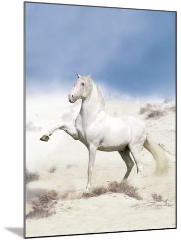 Dream Horses 063-Bob Langrish-Mounted Photographic Print