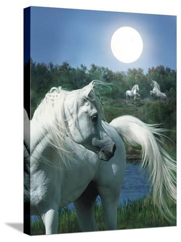 Dream Horses 066-Bob Langrish-Stretched Canvas Print