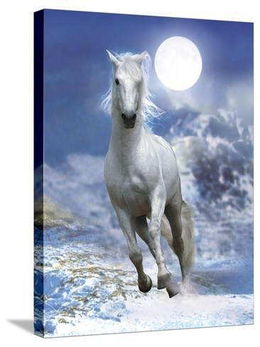 Dream Horses 060-Bob Langrish-Stretched Canvas Print