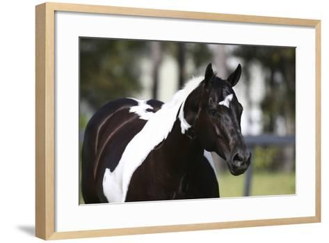 Painted 029-Bob Langrish-Framed Art Print
