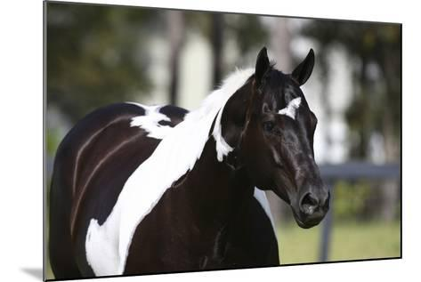 Painted 029-Bob Langrish-Mounted Photographic Print