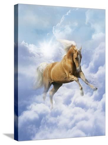 Dream Horses 069-Bob Langrish-Stretched Canvas Print