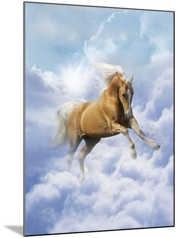 Dream Horses 069-Bob Langrish-Mounted Photographic Print