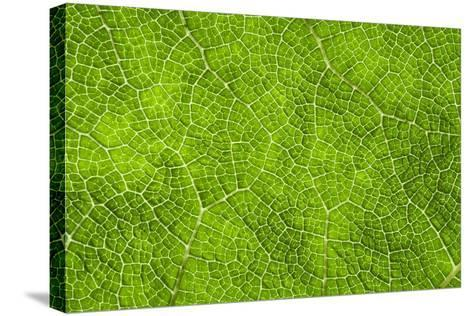 Leaf Texture VII-Cora Niele-Stretched Canvas Print