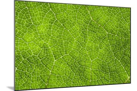 Leaf Texture VII-Cora Niele-Mounted Photographic Print