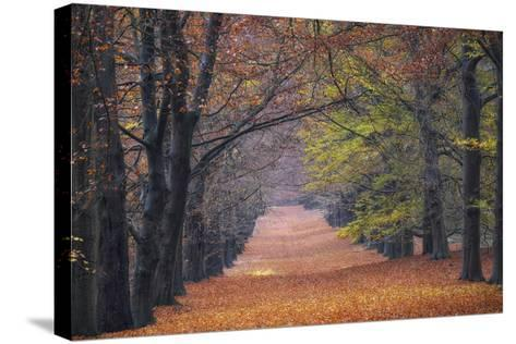 Beech Lane-Cora Niele-Stretched Canvas Print