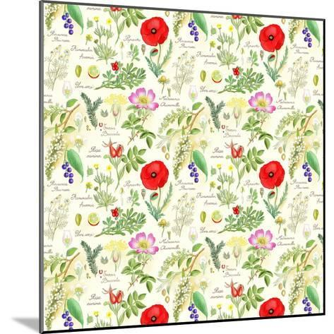 Bothanical Sketches-Gaia Marfurt-Mounted Giclee Print