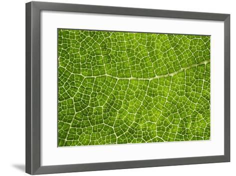 Green Leaf Texture-Cora Niele-Framed Art Print