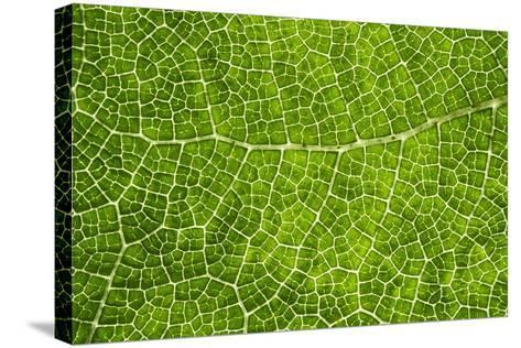 Green Leaf Texture-Cora Niele-Stretched Canvas Print