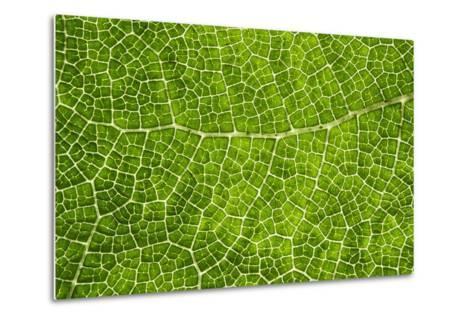 Green Leaf Texture-Cora Niele-Metal Print