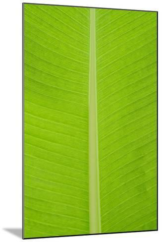 Leaf Texture I-Cora Niele-Mounted Photographic Print