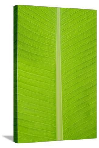 Leaf Texture I-Cora Niele-Stretched Canvas Print