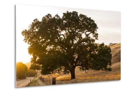 Roadside Oak-Lance Kuehne-Metal Print