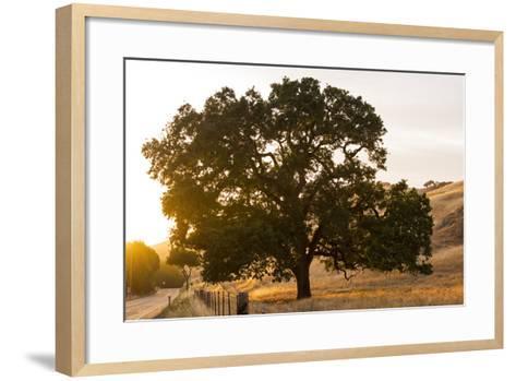 Roadside Oak-Lance Kuehne-Framed Art Print