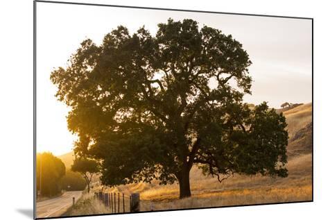 Roadside Oak-Lance Kuehne-Mounted Photographic Print