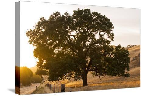 Roadside Oak-Lance Kuehne-Stretched Canvas Print