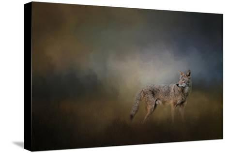 Coyote at Shiloh-Jai Johnson-Stretched Canvas Print