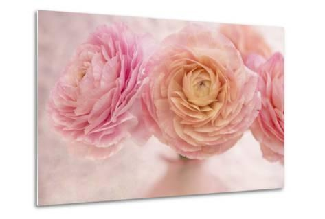 Pink Persian Buttercup Bouquet-Cora Niele-Metal Print