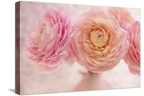 Pink Persian Buttercup Bouquet-Cora Niele-Stretched Canvas Print