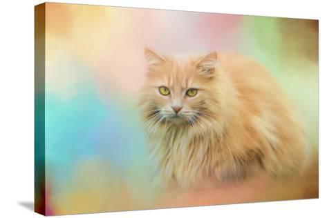 Waiting for Birds-Jai Johnson-Stretched Canvas Print