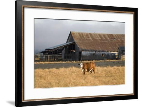 Cow Portrait-Lance Kuehne-Framed Art Print