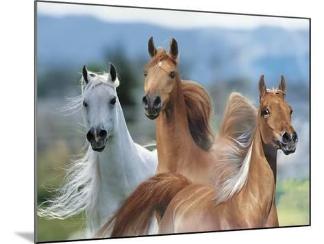 Dream Horses 026-Bob Langrish-Mounted Photographic Print