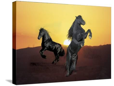 Dream Horses 024-Bob Langrish-Stretched Canvas Print