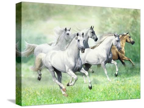 Dream Horses 028-Bob Langrish-Stretched Canvas Print
