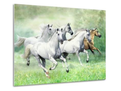 Dream Horses 028-Bob Langrish-Metal Print