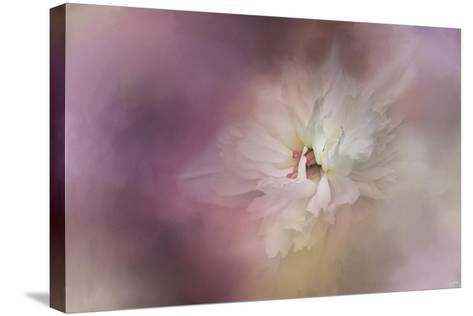 White Peony 1-Jai Johnson-Stretched Canvas Print