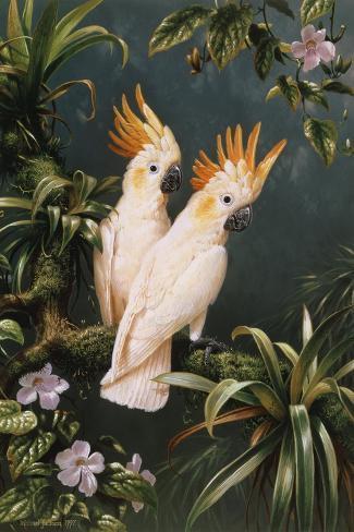 Cockatoos-Michael Jackson-Stretched Canvas Print