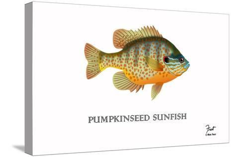 Pumpkinseed Sunfish-Mark Frost-Stretched Canvas Print
