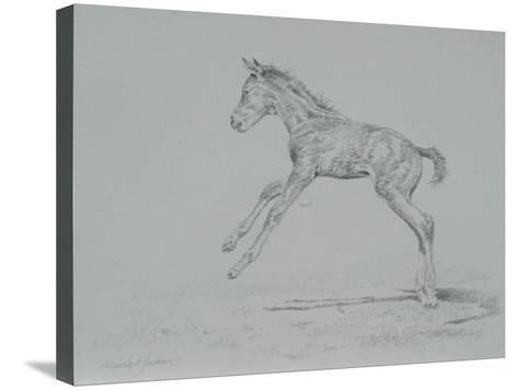 Foal Sketch-Michael Jackson-Stretched Canvas Print