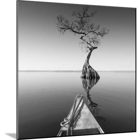 Alone with My Tree-Moises Levy-Mounted Photographic Print