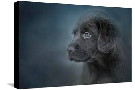 Blue Eyed Puppy-Jai Johnson-Stretched Canvas Print