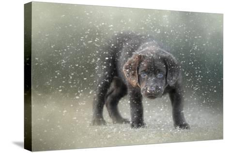 Her First Snow-Jai Johnson-Stretched Canvas Print