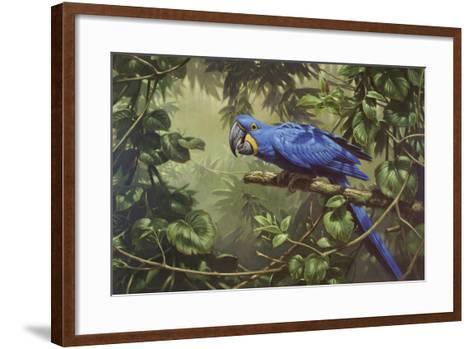 Hyacinth Macaw-Michael Jackson-Framed Art Print