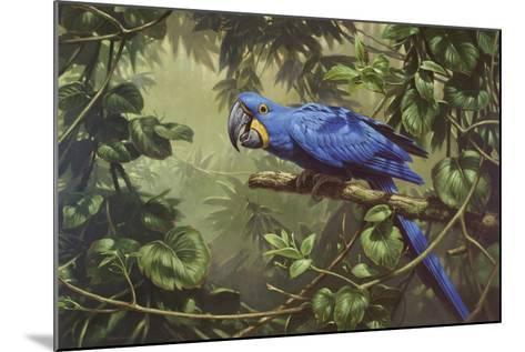 Hyacinth Macaw-Michael Jackson-Mounted Giclee Print