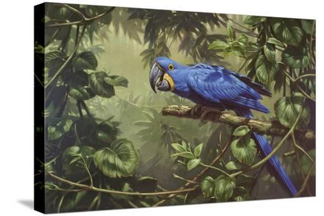 Hyacinth Macaw-Michael Jackson-Stretched Canvas Print