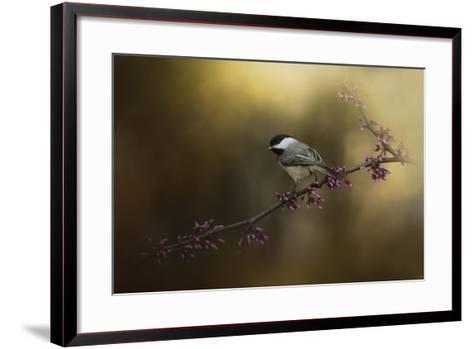 Chickadee in the Golden Light-Jai Johnson-Framed Art Print