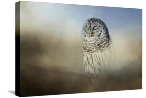Daydreaming-Jai Johnson-Stretched Canvas Print